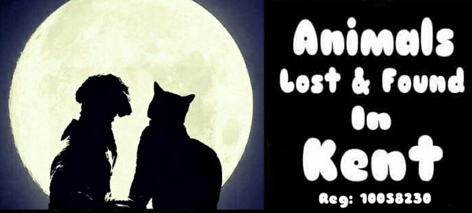 animals lost, dog lost, cat lost, animal lfound, dog found, cat found, dog lost kent, cat lost kent, animal lost kent,
