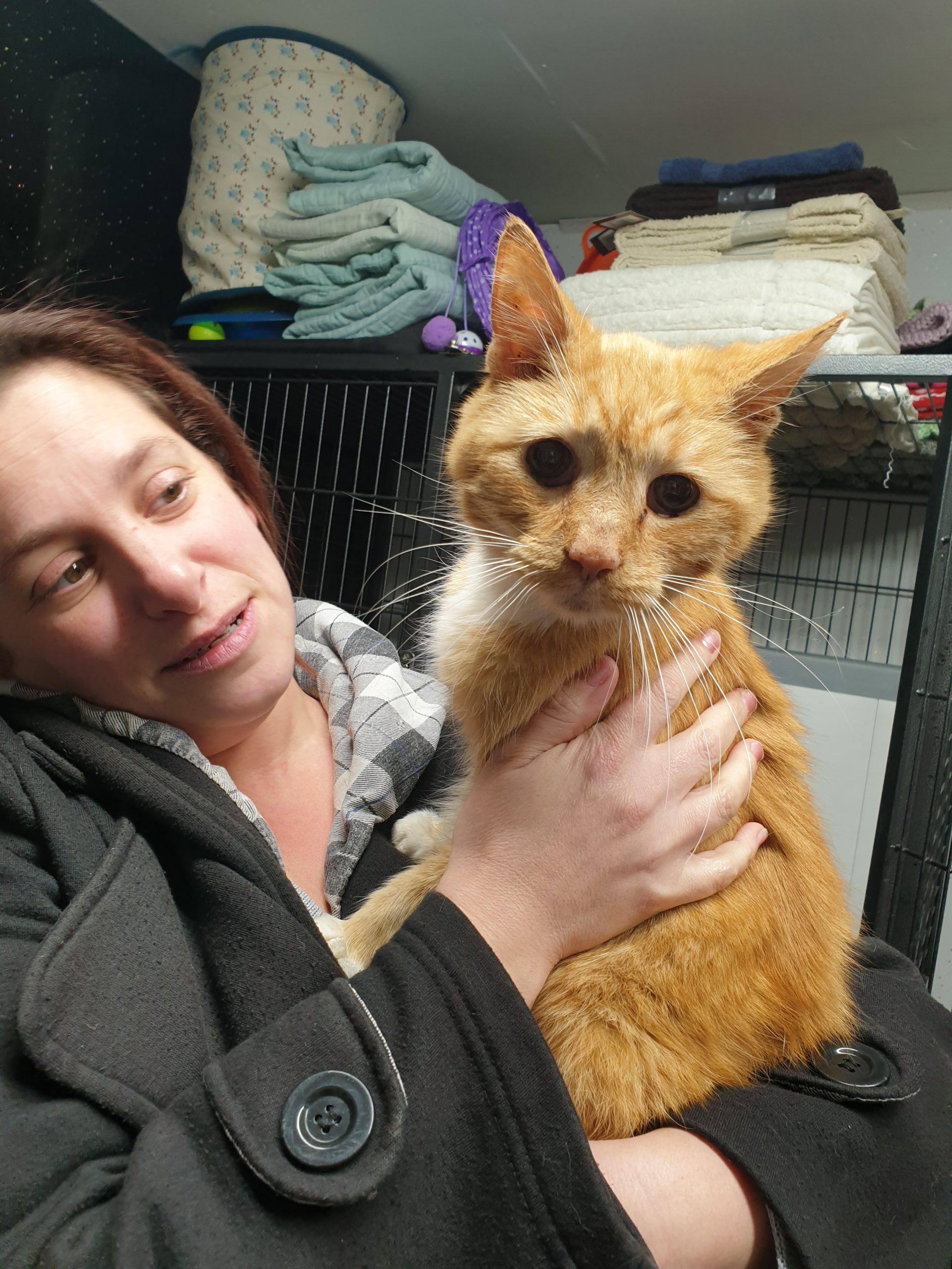 Cat found Kent,